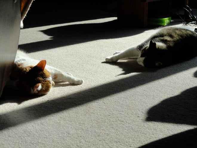 cats sunning