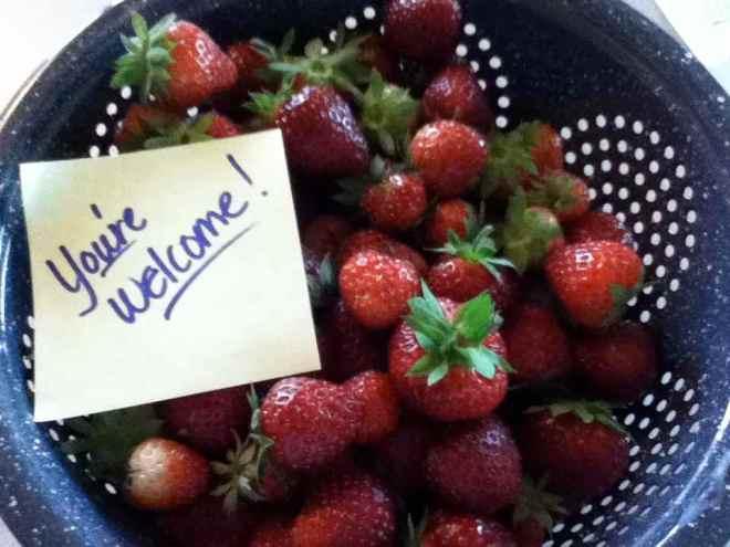 2013 strawberries 2
