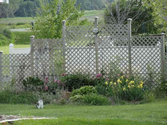 lattice garden